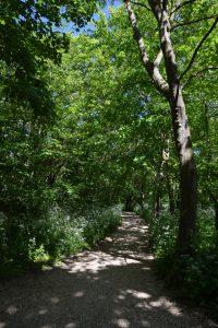 Vakantie in Domburg - wandelen door het bos